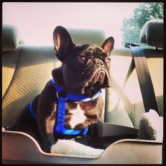 Louie on the way to work